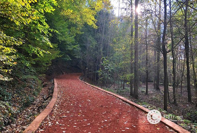 جنگل بلگراد استانبول 2