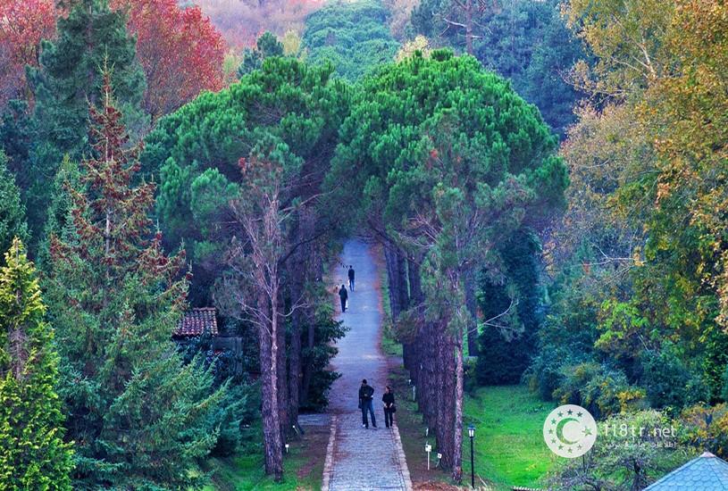 جنگل بلگراد استانبول 7