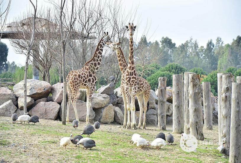 باغ وحش ازمیر 2