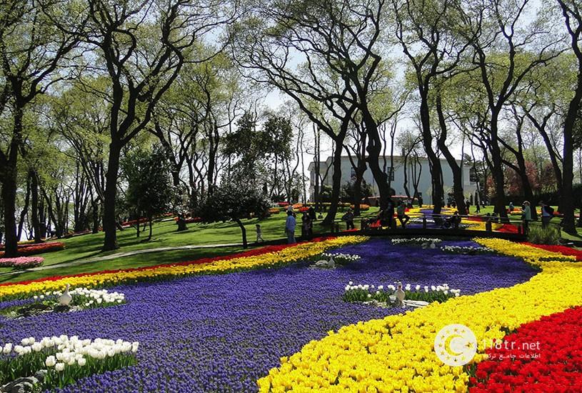 فستیوال گل لاله